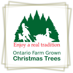 Ontario Farm Grown Chrismas Trees